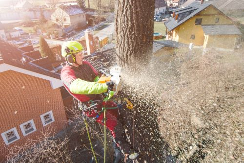 mr-tree-what-kind-of-insurance-covers-tree-service