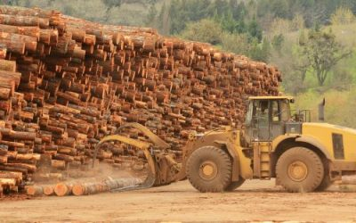 What Services Do Local Logging Companies Offer?
