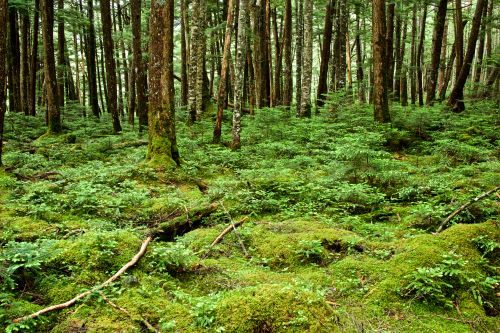 Is Moss a Plant? All You Need to Know about Moss in Your Yard