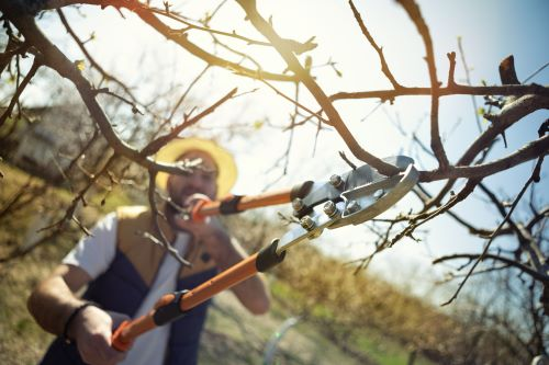 What Is the Best Time of Year to Hire a Tree Service?