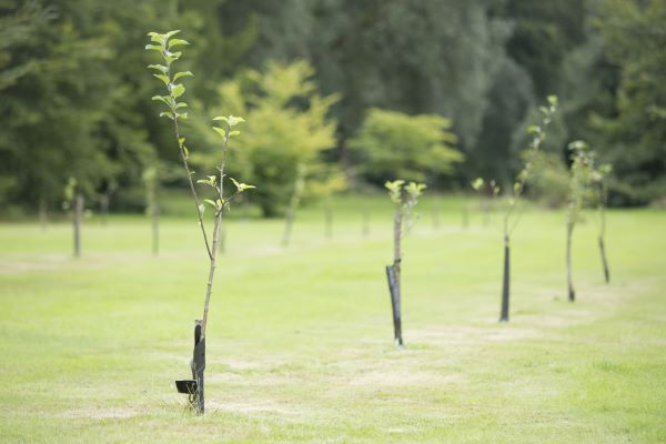 How Close Can I Plant Trees to Each Other?