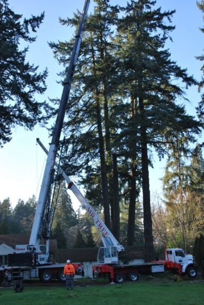 What Is Included in a Free Quote for Tree Removal?
